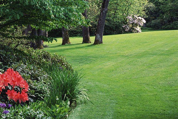 Trawnik z rolki – propozycja wytwórcy